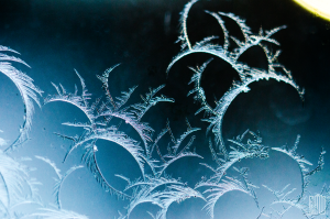 Feathered Frost
